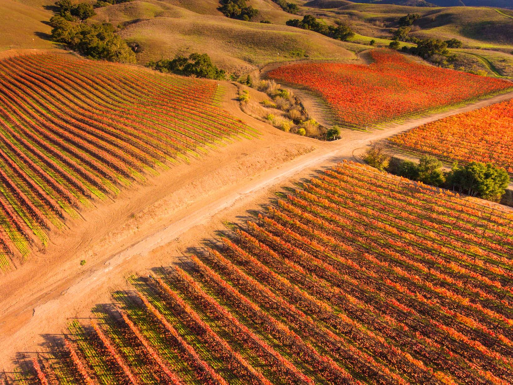 Aerial_Fall_Vineyard1