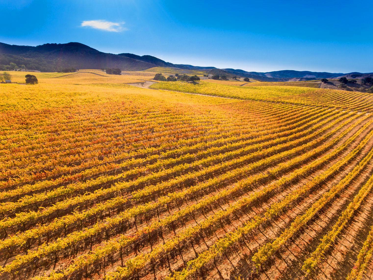 Aerial_Fall_Vineyard4jpg