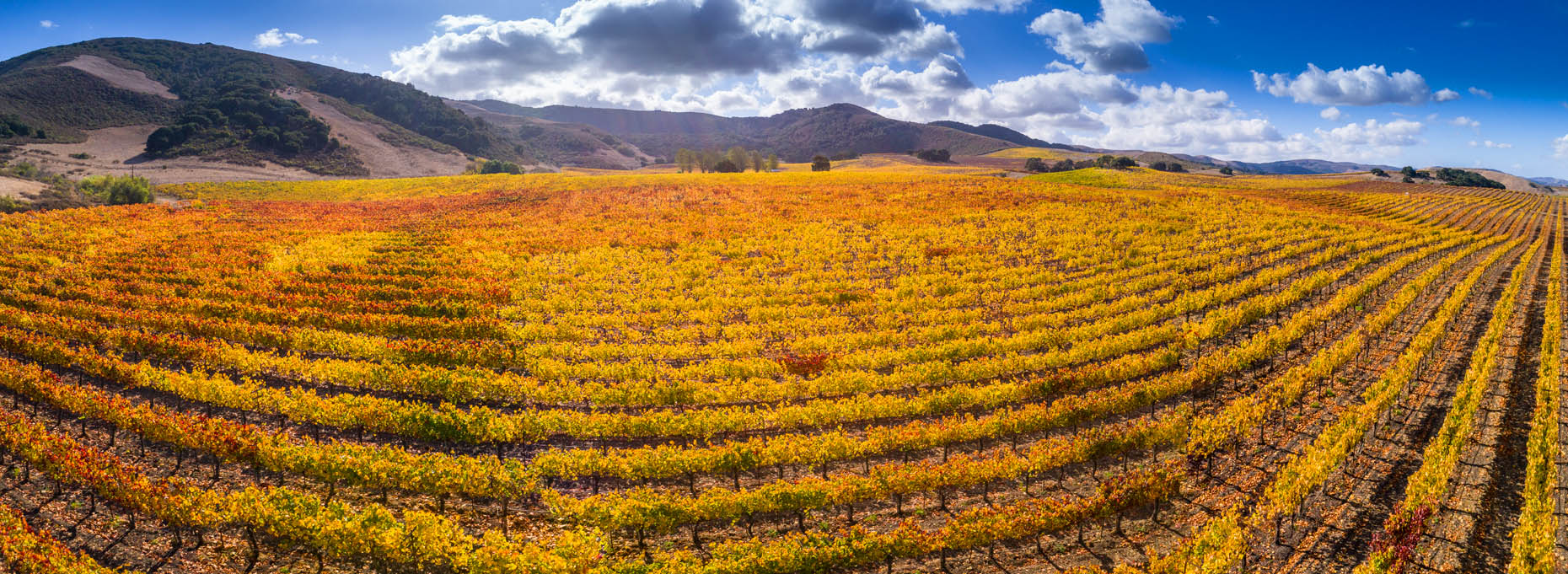 Aerial_Vineyard_Pano