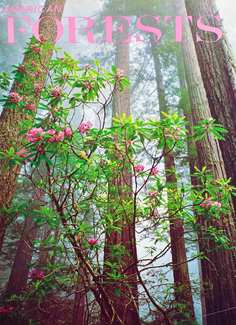 American_Forests_Rhodo