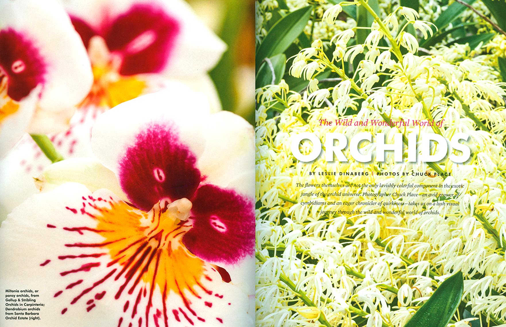 Seasons_Orchids1
