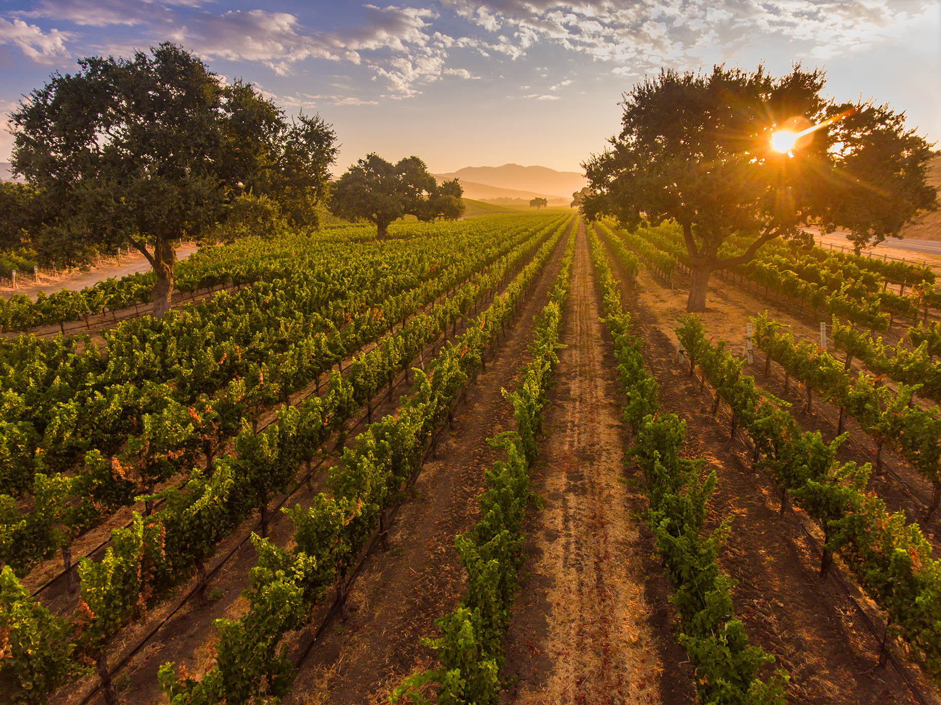 Aerial_Vineyard_Sunrise